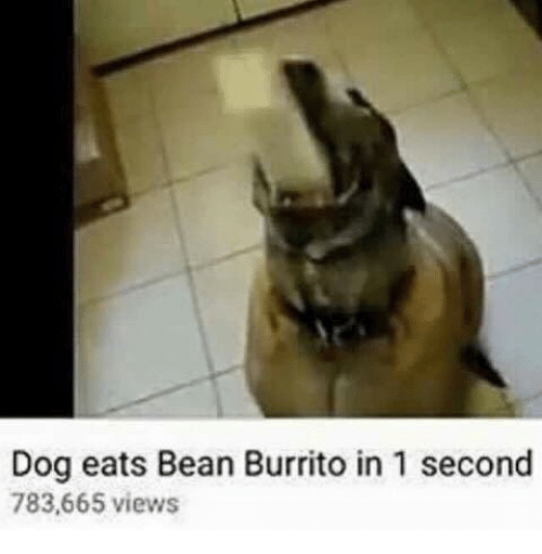1 Second: Dog eats Bean Burrito in 1 second  783,665 views