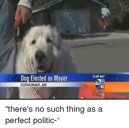 "Girl Memes: Dog Elected as Mayor  CORMORANT, MN  5.29 84 ""there's no such thing as a perfect politic-"""