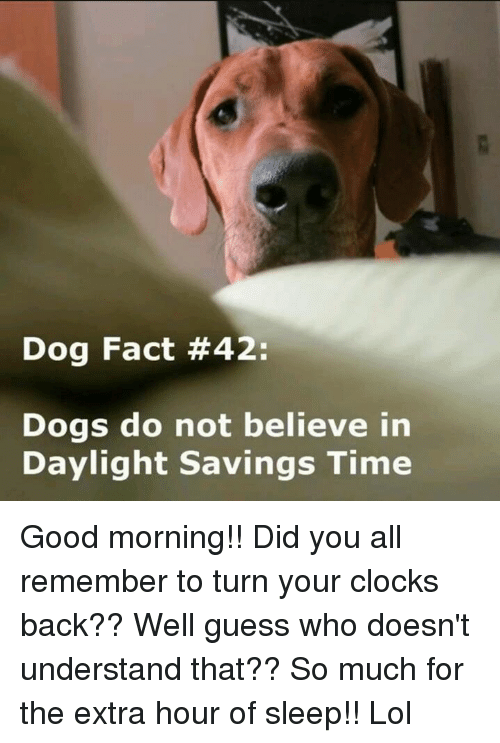 Good Morning Did You Sleep Well In French : Best memes about daylight savings time and sleeping