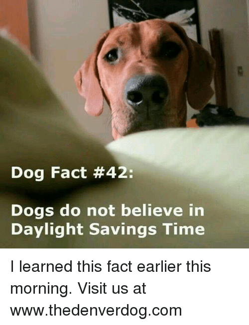 Daylight Savings Time: Dog Fact #42:  Dogs do not believe in  Daylight savings Time I learned this fact earlier this morning.  Visit us at www.thedenverdog.com