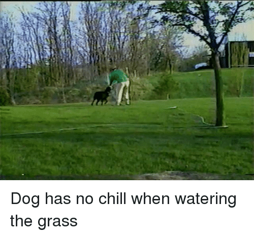 Has No Chill: Dog has no chill when watering the grass