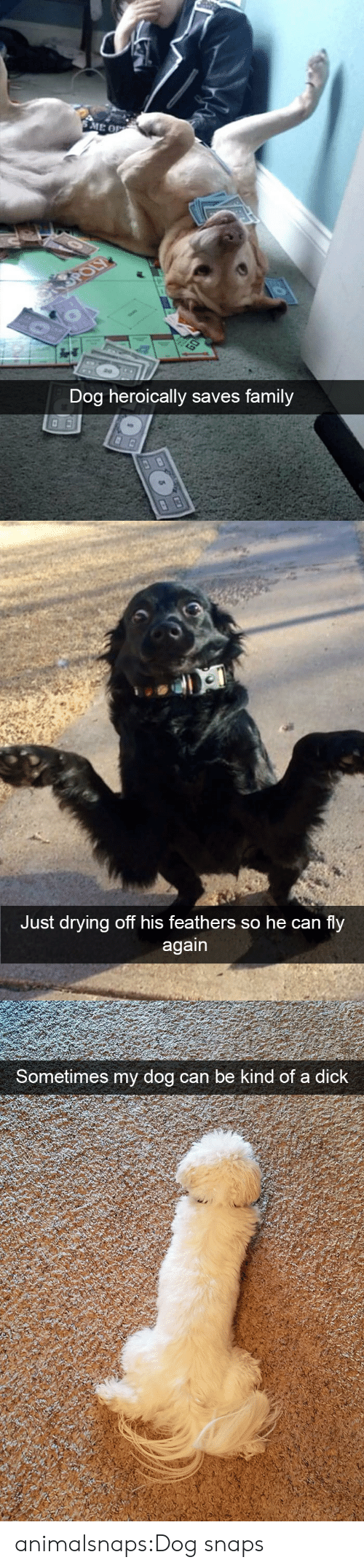 Feathers: Dog heroically saves family   Just drying off his feathers so he can fly   Sometimes my dog can be  kind of a dick animalsnaps:Dog snaps