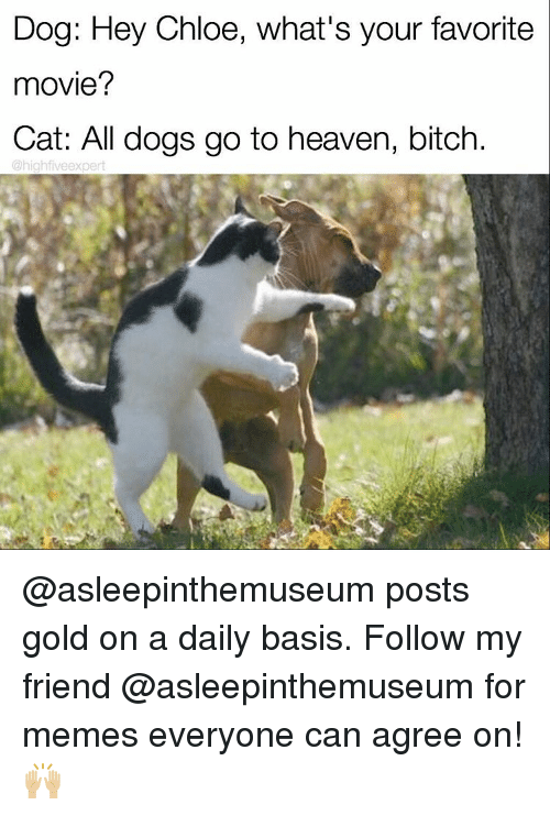 Bitch, Cats, and Friends: Dog: Hey Chloe, what's your favorite  movie?  Cat: All dogs go to heaven, bitch  @highfiveexpert @asleepinthemuseum posts gold on a daily basis. Follow my friend @asleepinthemuseum for memes everyone can agree on! 🙌🏼