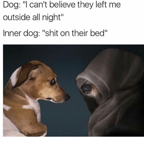dog i cant believe they left me outside all night 7187752 dog i can't believe they left me outside all night inner dog shit,Dank Memes Dog