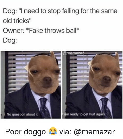 "Fake, Memes, and Old: Dog: ""I need to stop falling for the same  old tricks""  Owner: *Fake throws ball*  Dog  @memezar.  ready to get hurt again.  No question about it.  am Poor doggo 😂 via: @memezar"