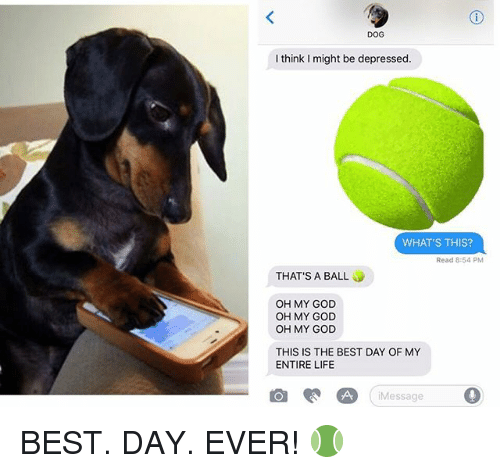 God, Life, and Memes: DOG  I think I might be depressed  WHAT'S THIS?  Read 8:54 PM  THAT'S A BALL  OH MY GOD  OH MY GOD  OH MY GOD  THIS IS THE BEST DAY OF MY  ENTIRE LIFE  回ee四Message  , BEST. DAY. EVER! 🎾