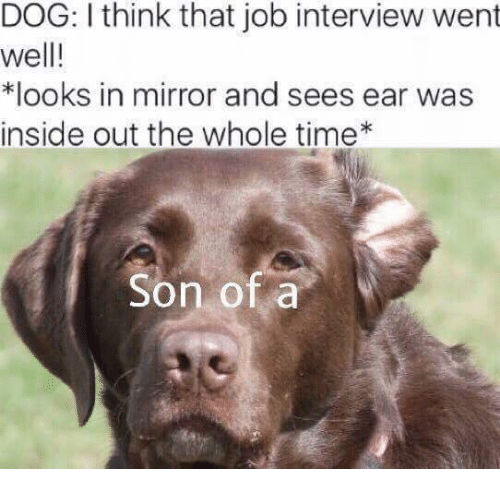 Inside Out, Job Interview, and Mirror: DOG: I think that job interview went  well!  *looks in mirror and sees ear was  inside out the whole time  Son of a