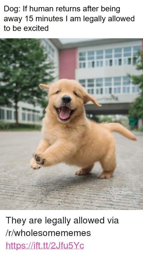 """Dog, Human, and Via: Dog: If human returns after being  away 15 minutes l am legally allowed  to be excited <p>They are legally allowed via /r/wholesomememes <a href=""""https://ift.tt/2Jfu5Yc"""">https://ift.tt/2Jfu5Yc</a></p>"""