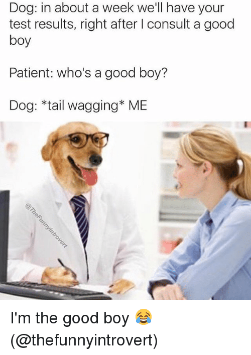 Memes, Good, and Patient: Dog: in about a week we'll have your  test results, right after l consult a good  boy  Patient: who's a good boy?  Dog: *tail wagging* ME I'm the good boy 😂 (@thefunnyintrovert)