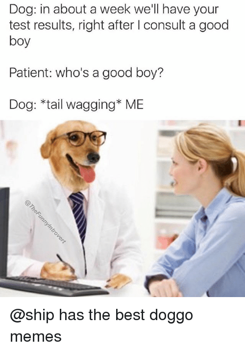 tail wagging: Dog: in about a week we'll have your  test results, right after I consult a good  boy  Patient: who's a good boy?  Dog: *tail wagging* ME @ship has the best doggo memes