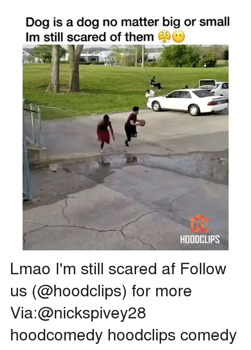 Af, Funny, and Lmao: Dog is a dog no matter big or small  Im still scared of them  CAO  HDODCLIPS Lmao I'm still scared af Follow us (@hoodclips) for more Via:@nickspivey28 hoodcomedy hoodclips comedy