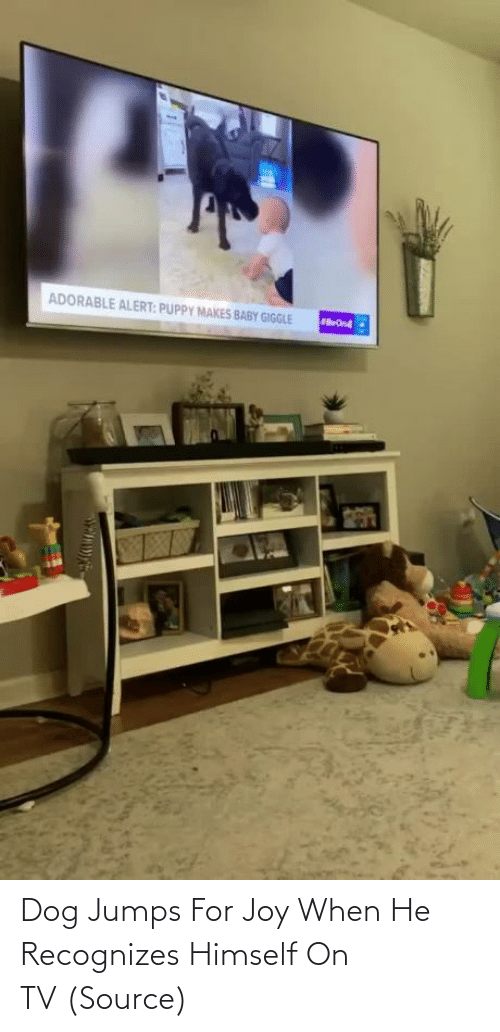 Dog: Dog Jumps For Joy When He Recognizes Himself On TV (Source)