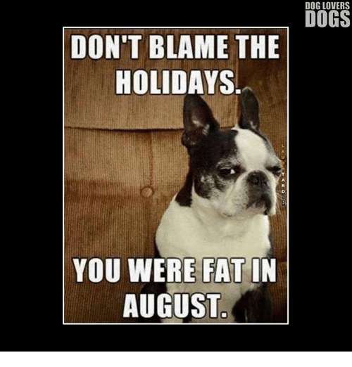 Dont Blame The Holidays You Were Fat In August: DOG LOVERS  DOGS  DON'T BLAME THE  HOLIDAYS  YOU WERE FAT IN  AUGUST