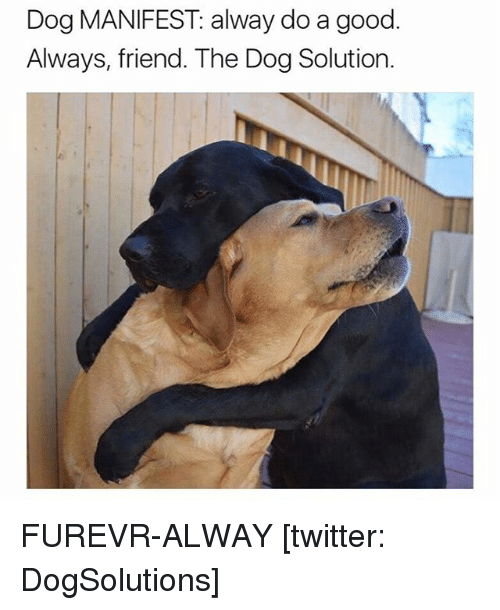 Good: Dog MANIFEST alway do a good.  Always, friend. The Dog Solution. FUREVR-ALWAY [twitter: DogSolutions]