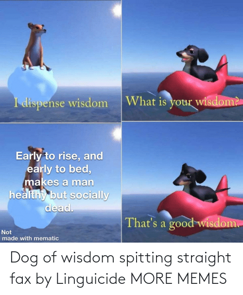 Wisdom: Dog of wisdom spitting straight fax by Linguicide MORE MEMES
