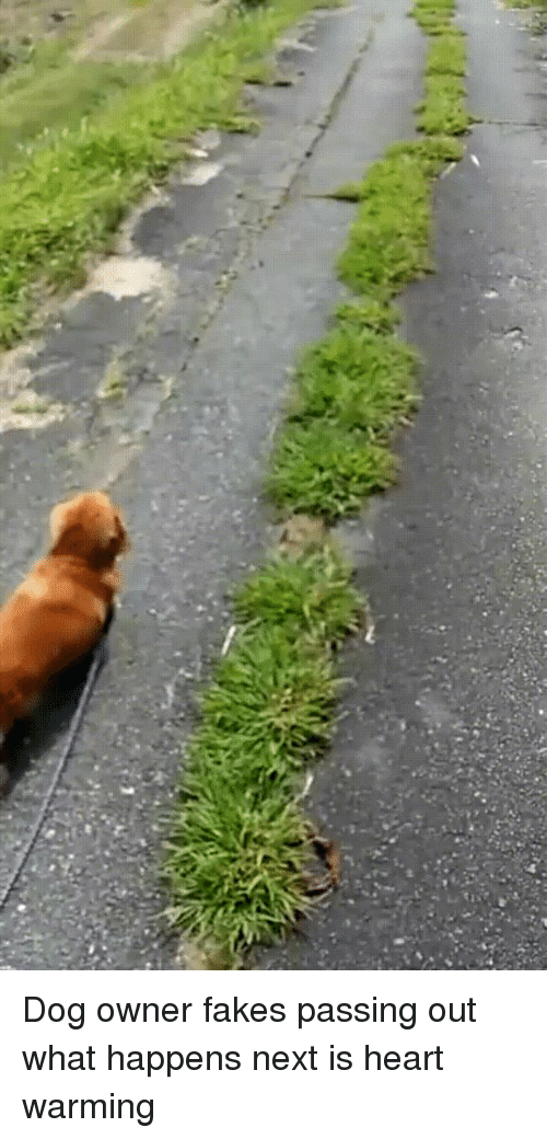 Funny and Fake Pass: Dog owner fakes passing out what happens next is heart warming