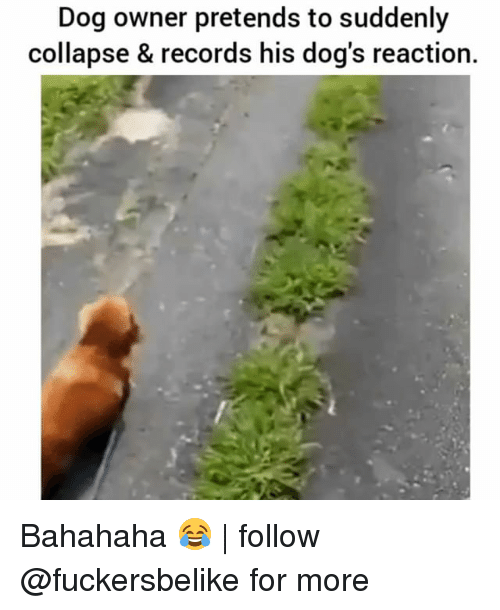 Bahahaha: Dog owner pretends to suddenly  collapse & records his dog's reaction. Bahahaha 😂 | follow @fuckersbelike for more