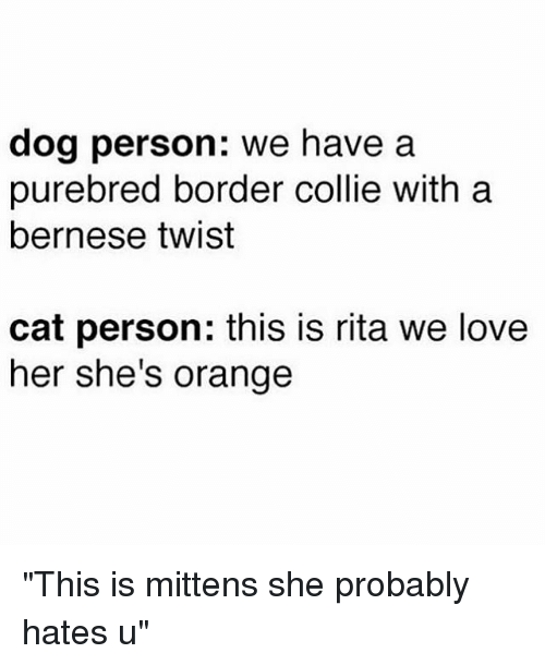 "Border Collie, Orange, and Girl Memes: dog person: we have a  purebred border collie with a  bernese twist  cat person: this is rita we love  her she's orange ""This is mittens she probably hates u"""