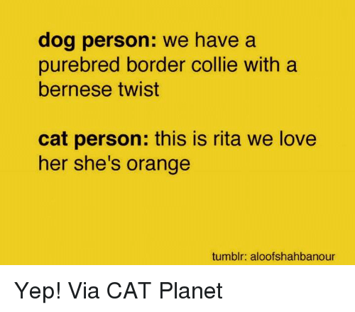 Love, Memes, and Tumblr: dog person: we have a  purebred border collie with a  bernese twist  cat person: this is rita we love  her she's orange  tumblr: aloofshahbanour Yep! Via CAT Planet