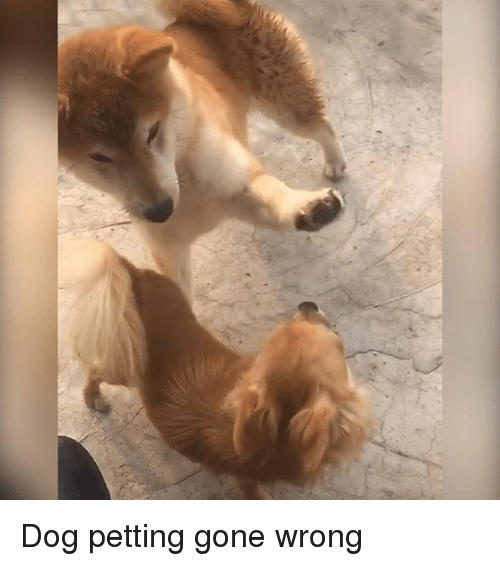 Gone Wrong: Dog petting gone wrong