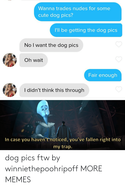 Dog: dog pics ftw by winniethepoohripoff MORE MEMES