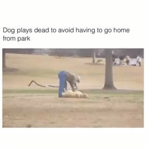Dog Plays Dead Park Videos