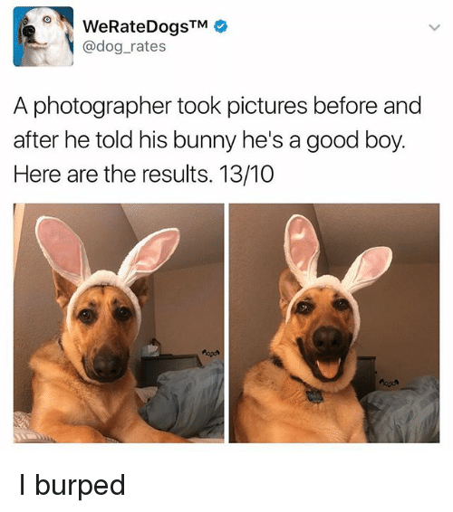 Memes, Good, and Pictures: @dog_rates  A photographer took pictures before and  after he told his bunny he's a good boy.  Here are the results. 13/10 I burped