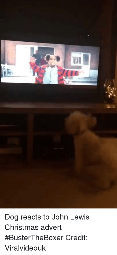 Adverted: Dog reacts to John Lewis Christmas advert #BusterTheBoxer Credit: Viralvideouk