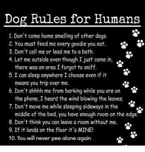 Dog Rules For Humans 1 Don 39 T Come Home Smelling Of Other