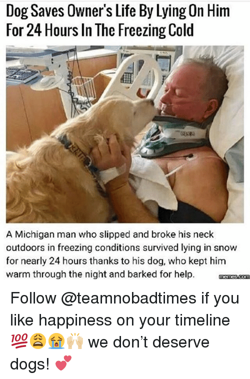 Dogs, Life, and Memes: Dog Saves Owner's Life By Lying On Hinm  For 24 Hours In The Freezing Cold  A Michigan man who slipped and broke his neck  outdoors in freezing conditions survived lying in snow  for nearly 24 hours thanks to his dog, who kept him  warm through the night and barked for help. manzscom Follow @teamnobadtimes if you like happiness on your timeline 💯😩😭🙌🏼 we don't deserve dogs! 💕