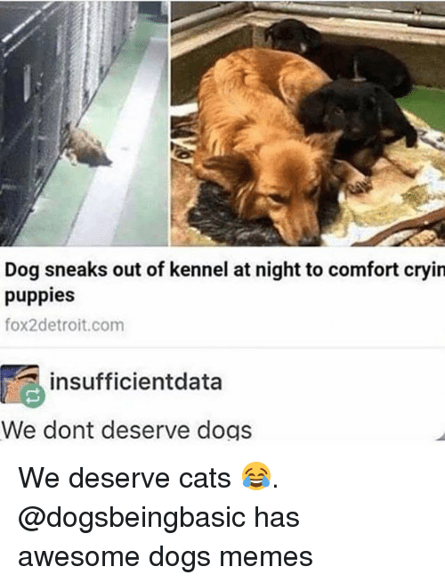 Cats, Dogs, and Funny: Dog sneaks out of kennel at night to comfort cryin  puppies  fox2detroit.com  insufficientdata  We dont deserve dogs We deserve cats 😂. @dogsbeingbasic has awesome dogs memes