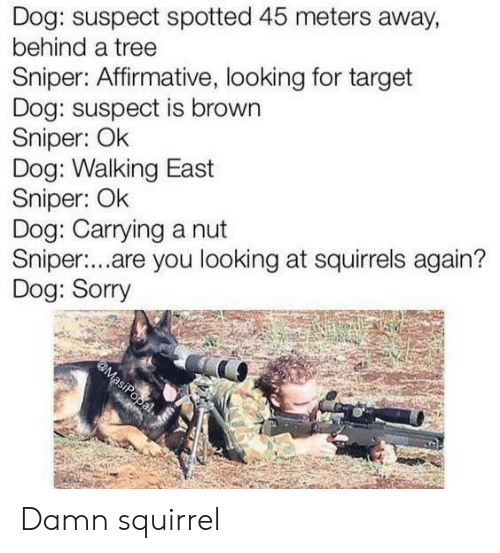 squirrels: Dog: suspect spotted 45 meters away,  behind a tree  Sniper: Affirmative, looking for target  Dog: suspect is brown  Sniper: Ok  Dog: Walking East  Sniper: Ok  Dog: Carrying a nut  Sniper:...are you looking at squirrels again?  Dog: Sorry  @MasiPopal Damn squirrel