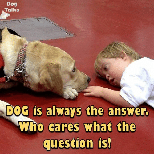 talking dogs: Dog  Talks  DOG is always the answer.  Who cares what the  question is!