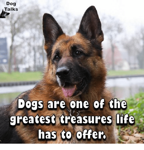 talking dogs: Dog  Talks  Dogs are one of the  greatest treasures life  has to offer