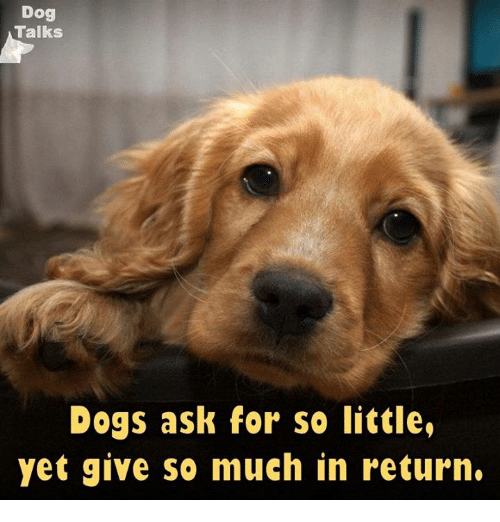 talking dogs: Dog  Talks  Dogs ask for so little,  yet give so much in return.