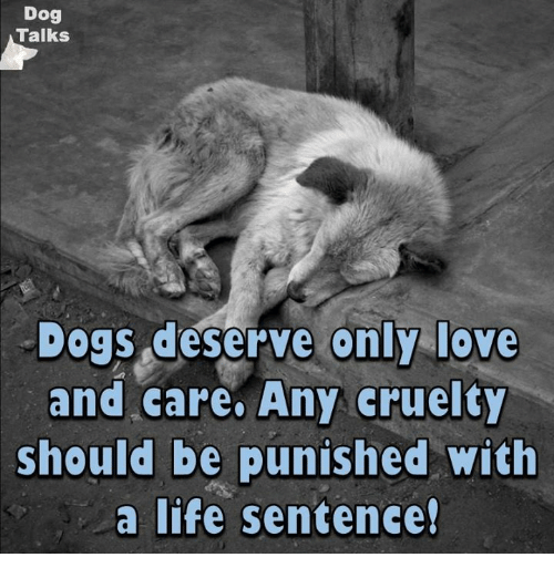 talking dogs: Dog  Talks  Dogs deserve only love  and care. Any cruelty  should be punished with  a life sentence!