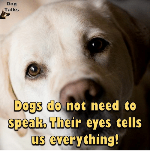 talking dogs: Dog  Talks  Dogs do not need to  speak Their eyes tells  us everything!