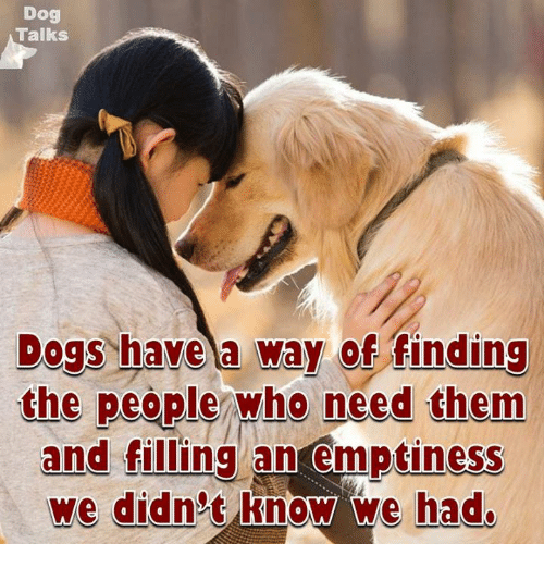talking dogs: Dog  Talks  Dogs have a way  of finding  the people who need them  and filling an emptiness  we didn't know we had.