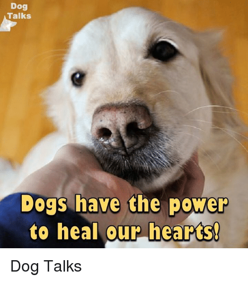 talking dogs: Dog  Talks  Dogs have the power  to heal our hearts! Dog Talks