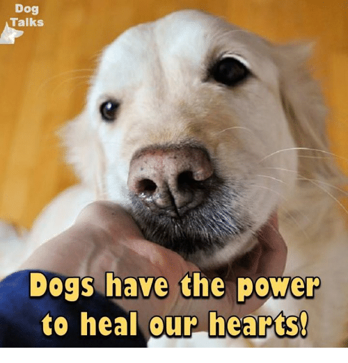 talking dogs: Dog  Talks  Dogs have the power  to heal our hearts!