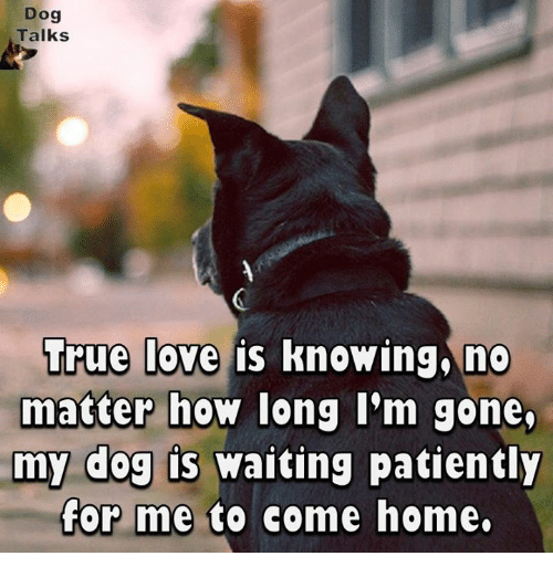 Waiting Patiently: Dog  Talks  True love is  knowing no  matter how long I'm gone.  my dog is waiting patiently  for me to come home.