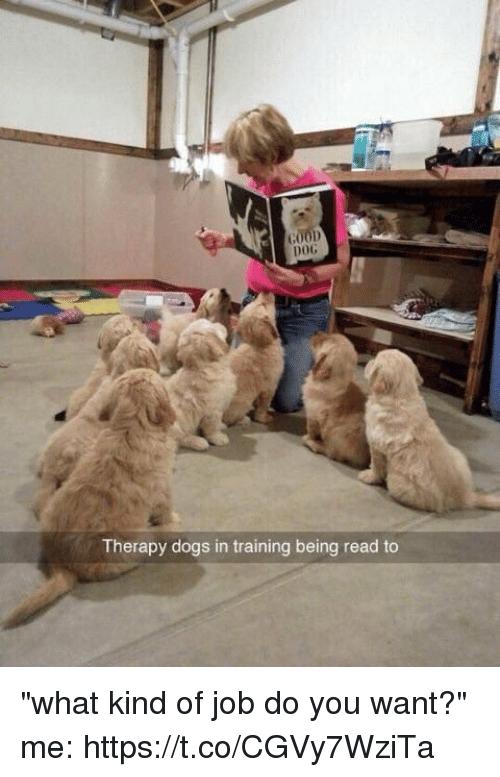 "Dogs, Dog, and Job: DOG  Therapy dogs in training being read to ""what kind of job do you want?"" me: https://t.co/CGVy7WziTa"