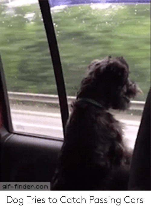 cars: Dog Tries to Catch Passing Cars