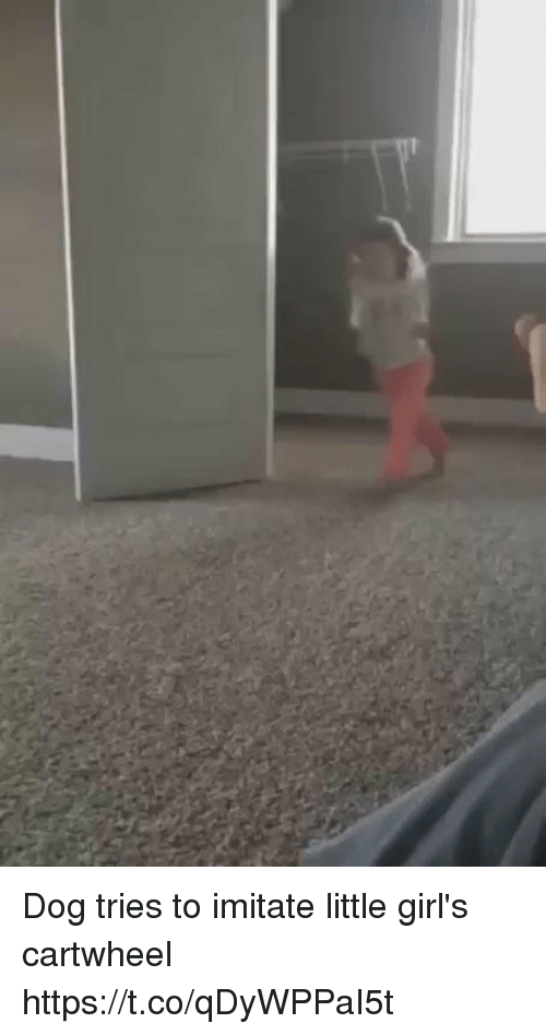cartwheel: Dog tries to imitate little girl's cartwheel https://t.co/qDyWPPaI5t