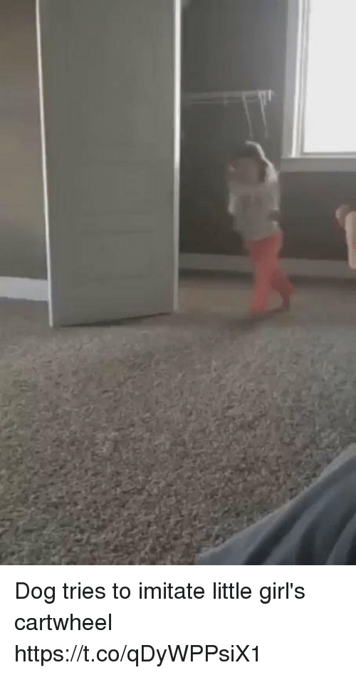 cartwheel: Dog tries to imitate little girl's cartwheel https://t.co/qDyWPPsiX1
