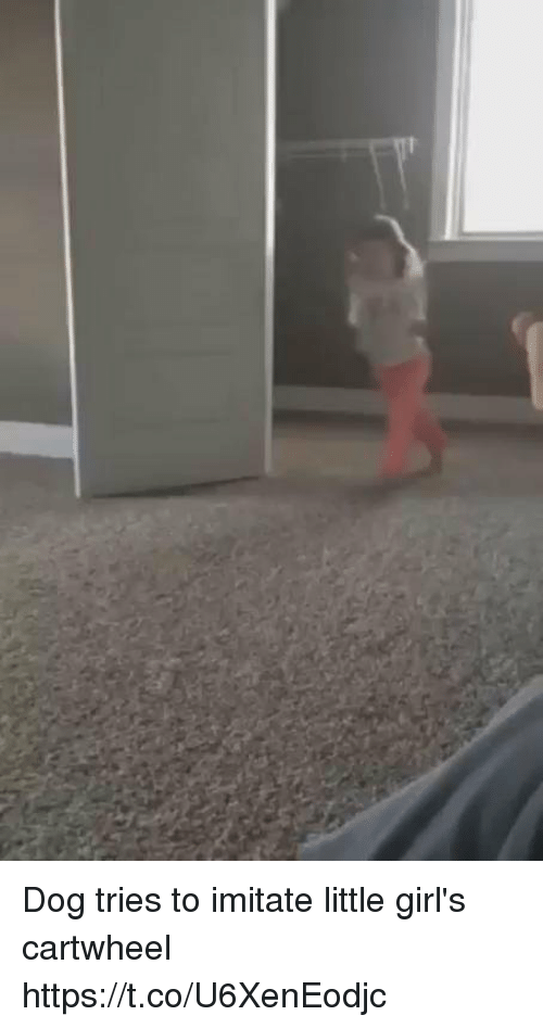cartwheel: Dog tries to imitate little girl's cartwheel https://t.co/U6XenEodjc