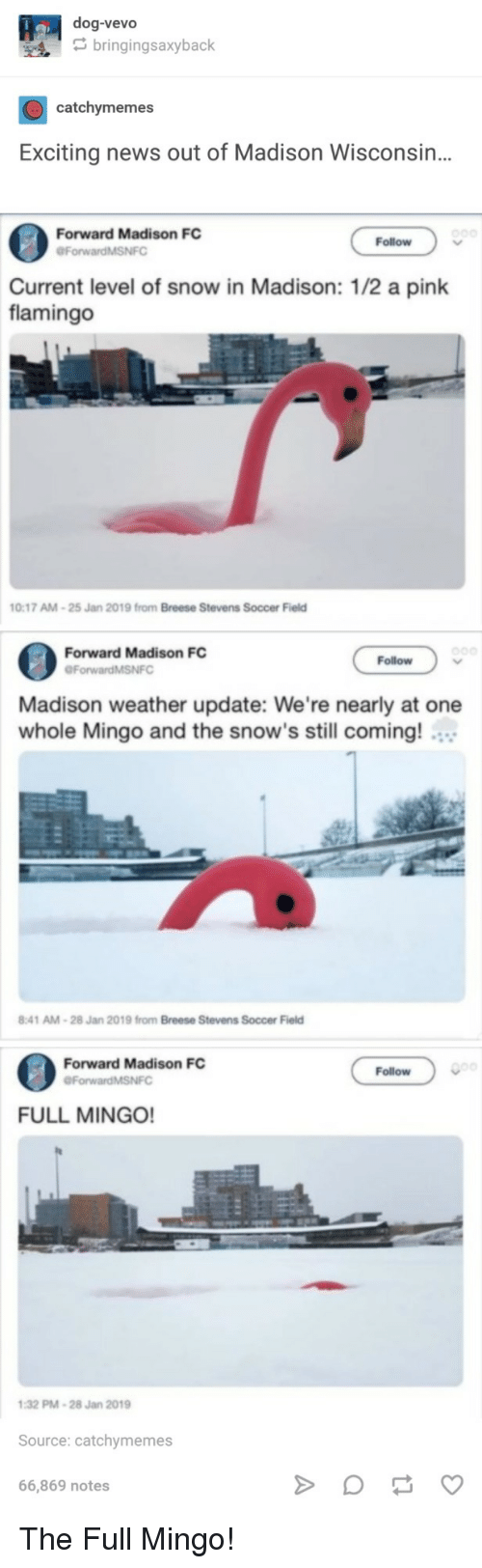 a pink: dog-vevo  bringingsaxyback  catchymemes  Exciting news out of Madison Wisconsin..  Forward Madison FC  ForwardMSNFO  Follow  Current level of snow in Madison: 1/2 a pink  flamingo  0:17 AM-25 Jan  2019 from Breese Stevens  Soccer Field  Forward Madison FC  Follow  Madison weather update: We're nearly at one  whole Mingo and the snow's still coming!  :41 AM-28 Jan 2019 from Breese Stevens Soccer Field  Forward Madison FC  Follow  ForwardMSNFC  FULL MINGO!  32 PM-28 Jan 2019  Source: catchymemes  66,869 notes The Full Mingo!