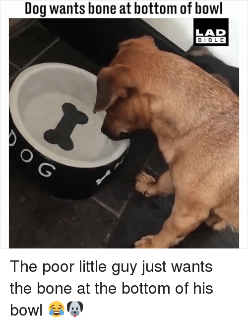 Memes, Bible, and Bowl: Dog wants bone at bottom of bowl  LAD  BIBLE The poor little guy just wants the bone at the bottom of his bowl 😂🐶