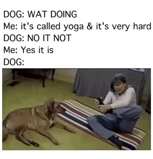 dog wat doing me its called yoga its very 2495460 dog wat doing me it's called yoga & it's very hard dog no it not