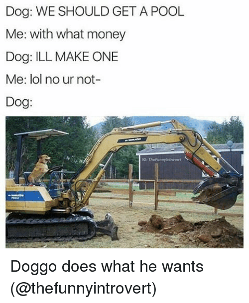 Money Dog: Dog: WE SHOULD GET A POOL  Me: with what money  Dog: ILL MAKE ONE  Me: lol no ur not-  Dog: Doggo does what he wants (@thefunnyintrovert)